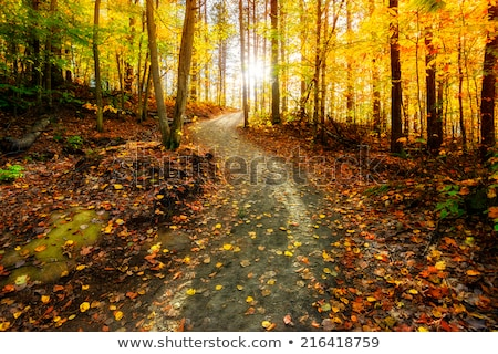 ősz kirándulás út kép túrázik hideg Stock fotó © rmbarricarte