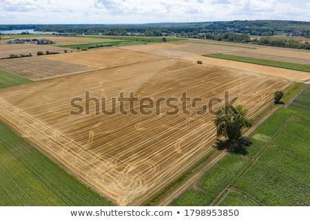 green rie fields stock photo © massonforstock