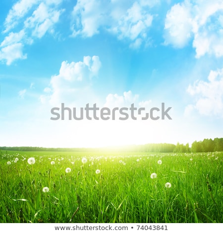 A bright sky and the beautiful green landscape Stock photo © bluering