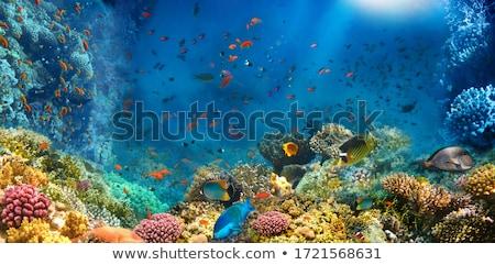 Hal korallzátony tenger illusztráció természet háttér Stock fotó © bluering