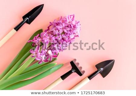 Kerti eszközök élénk fényes tavasz virág tavasz Stock fotó © JanPietruszka