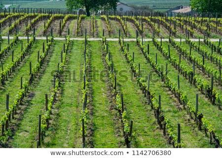 wijngaard · dorp · voorjaar · natuur · wereld · blad - stockfoto © FreeProd