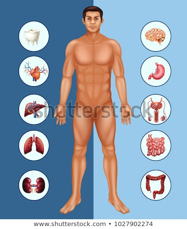 Diagram showing different organs of human Stock photo © colematt