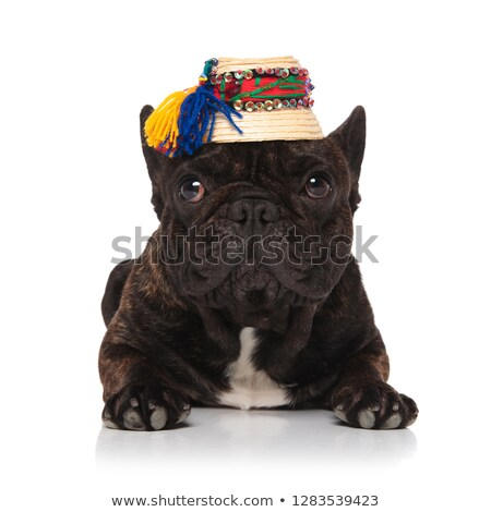 прелестный французский бульдог традиционный соломенной шляпе Сток-фото © feedough