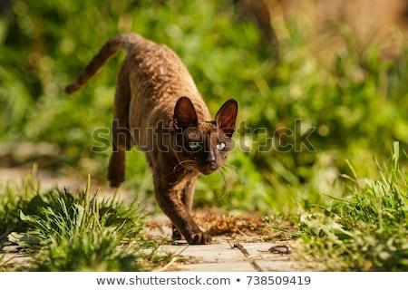 猫 子猫 座って 1 足 空気 ストックフォト © CatchyImages