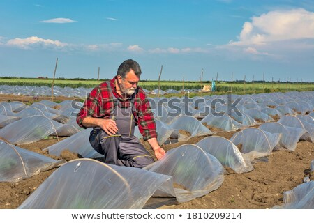 Gazda dinnye ültet mező megvizsgál minőség Stock fotó © simazoran