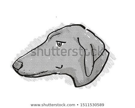 Cartoon retro rysunek stylu głowie Zdjęcia stock © patrimonio