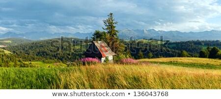 マシン · 植木屋 · 草 · 公園 · 自然 - ストックフォト © wildman