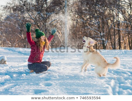 neve · cão · inglês · mastim · vermelho - foto stock © greatdividephoto