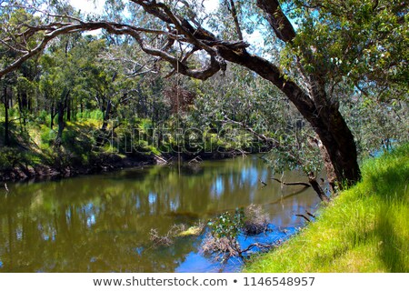Blackwood River Stock photo © zambezi