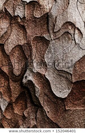 Közelkép kilátás fa ugatás fal természet Stock fotó © Massonforstock
