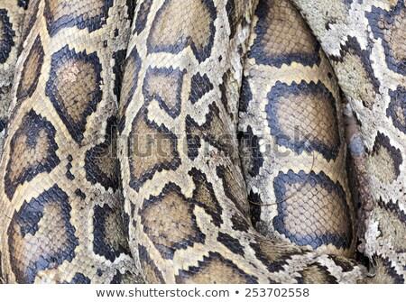 Portrait of snake skin. Stock photo © HASLOO