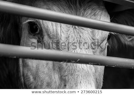Arkasında çubuklar genç bar çiftlik beyaz Stok fotoğraf © tepic