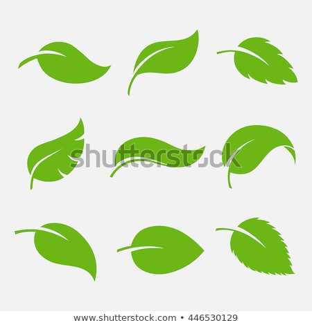 Vector green leaf icon  Stock photo © Elisanth