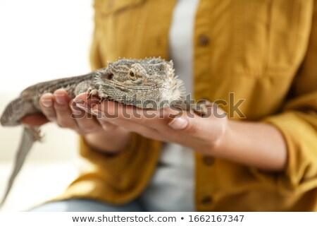 Lagarto mão isolado branco escala animais de estimação Foto stock © bloodua