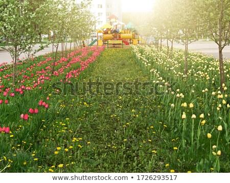 Flower bed design. Playground on the background Stock photo © iriana88w
