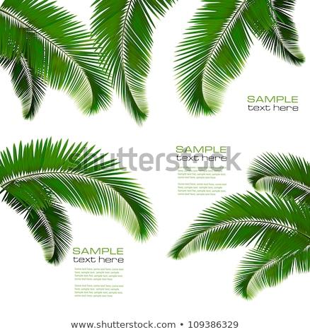 Tropical green palm tree background macro Stock photo © juniart