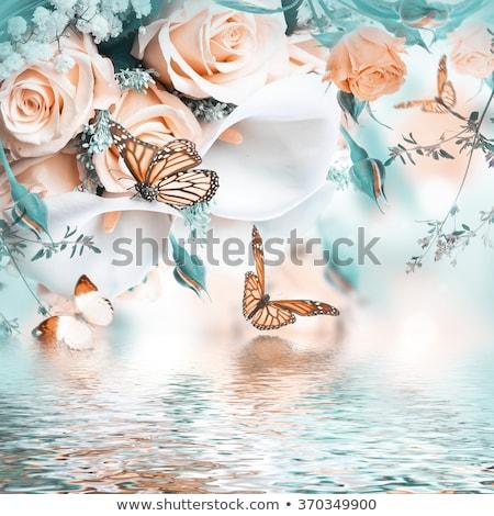 Papillons image illustration belle rose Photo stock © Irisangel