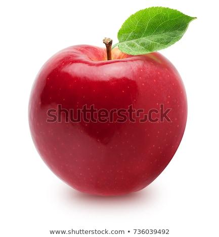 Organique pomme rouge branche fruits verger de pommiers pluie Photo stock © stevanovicigor