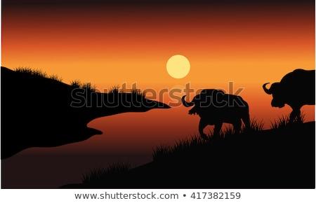 Indian hunting buffalo at sunset Stock photo © adrenalina