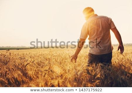 férfi · búzamező · gazda · áll · vektor · terv - stock fotó © rastudio