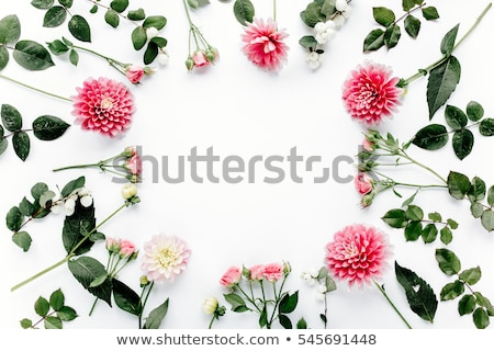 round frame wreath pattern with flower buds stock photo © artjazz