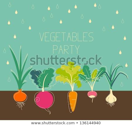 Vintage garden banner with root veggies Stock photo © Mamziolzi