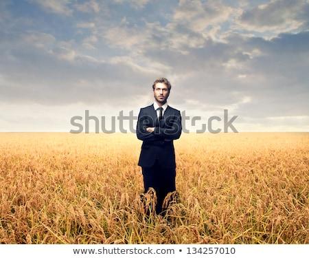 üzletember búzamező férfi szépség üzletember Európa Stock fotó © IS2