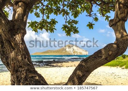 島 · 鳥 · 海岸 · ハワイ · 米国 · ビーチ - ストックフォト © dirkr
