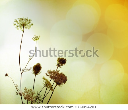 Fiori di campo verde bokeh natura primavera Foto d'archivio © romvo