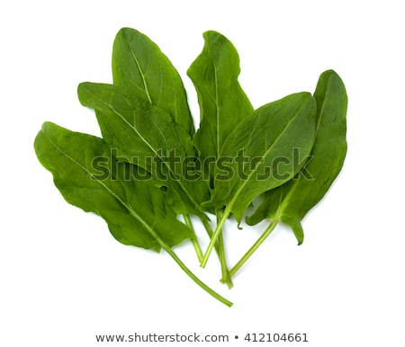 Fresh organic sorrel leaves Stock photo © Melnyk