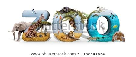 シーン 動物園 多くの 野生動物 実例 背景 ストックフォト © colematt