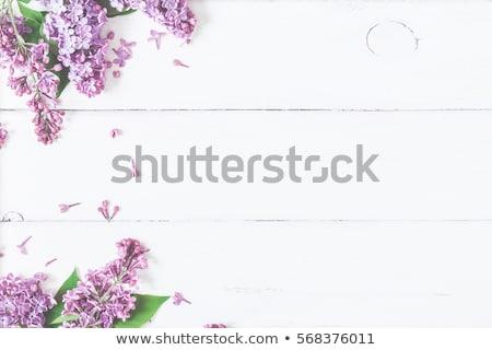 Tavasz orgona virágok keret dekoratív fehér Stock fotó © Kotenko