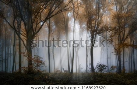Veado escuro floresta ilustração natureza projeto Foto stock © bluering