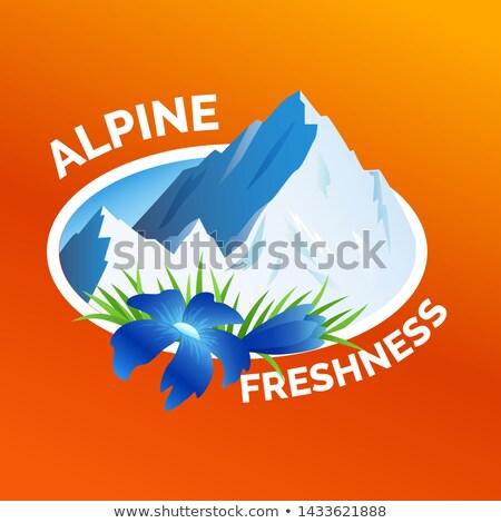 стиральные одежды наклейку альпийский свежесть символ Сток-фото © MarySan