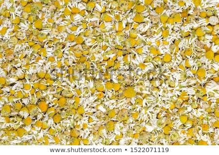 Secar camomila chá raso Foto stock © AGfoto