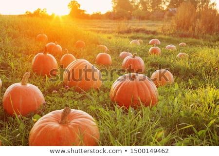 Zucche tramonto cielo felice halloween tavolo in legno Foto d'archivio © choreograph