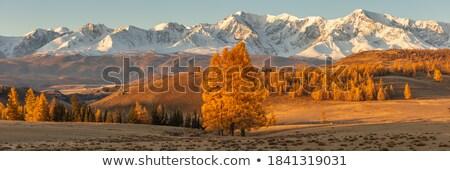Yalnız ağaç gökyüzü ahşap manzara alan Stok fotoğraf © olira
