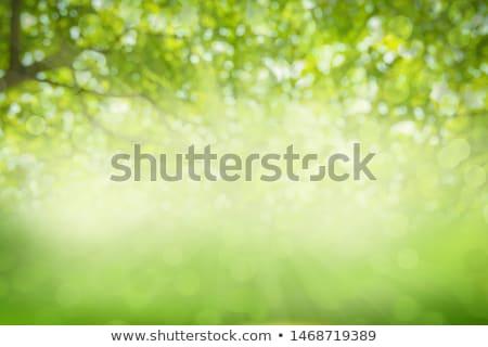 stilizált · fa · virágzik · sziluett · virág · természet - stock fotó © hermione