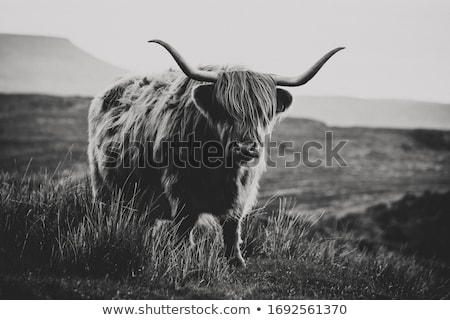 vaca · natureza · paisagem · montanha · fazenda · animal - foto stock © unkreatives
