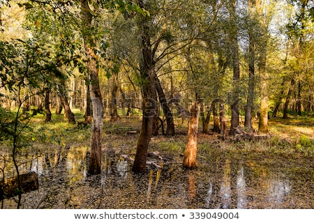 floodplain forest Stock photo © pavelmidi