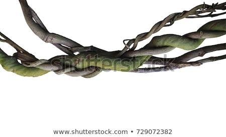 Dry Twisted Plants Stock photo © jkraft5