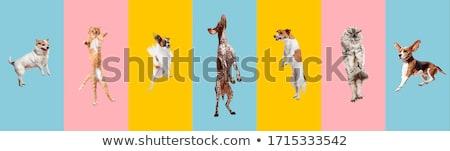 Játékos kutyakölyök vektor rajz stílus rajz Stock fotó © fizzgig
