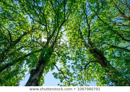 Hout as boom natuur deur interieur Stockfoto © artlens