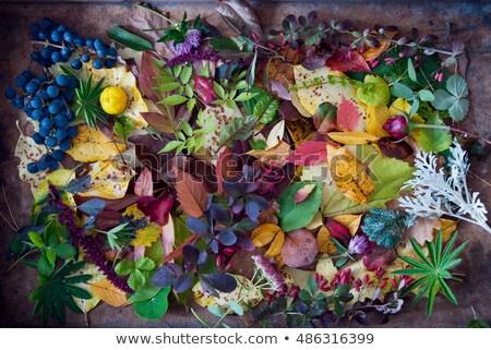 secar · maple · leaf · velho · cópia · espaço · árvore - foto stock © zerbor