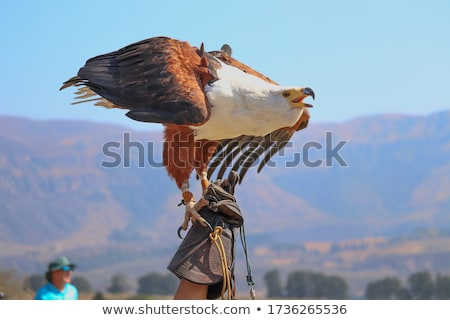 アフリカ 魚 イーグル ツリー 公園 ゲーム ストックフォト © Vividrange
