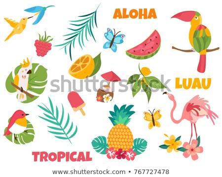 tropikal · kuş · renkli · ebegümeci · çiçekler · örnek - stok fotoğraf © lenm