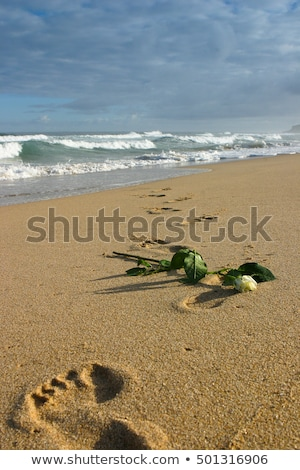 White rose and footprints in the sand on the beach in Portugal Stock photo © CaptureLight