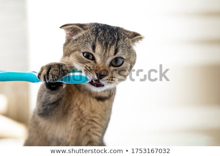A toothbrush and a tooth Stock photo © bluering
