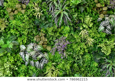 A wall with plants Stock photo © bluering